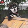 【何コレかわいい】犬であることを忘れたワンコが話題!【まとめ】